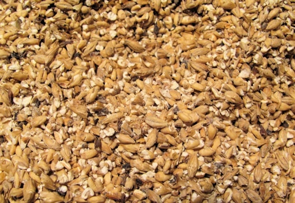 Homebrewing from all grain
