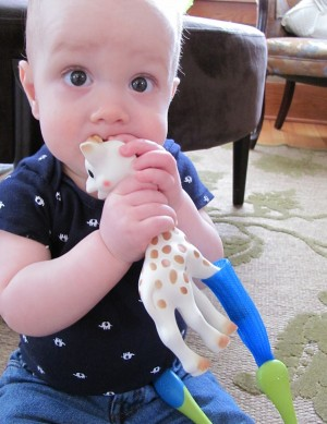The Boon Gnaw works great with Sophie Giraffe